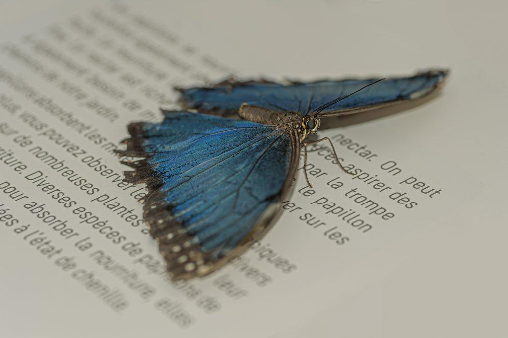 """Papillon"""